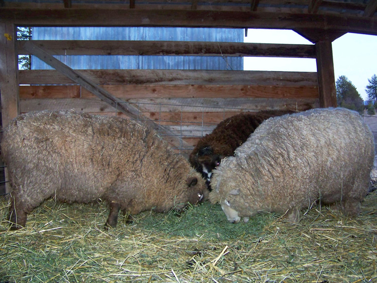 Skylines Farm Photo Of The Day Week Month