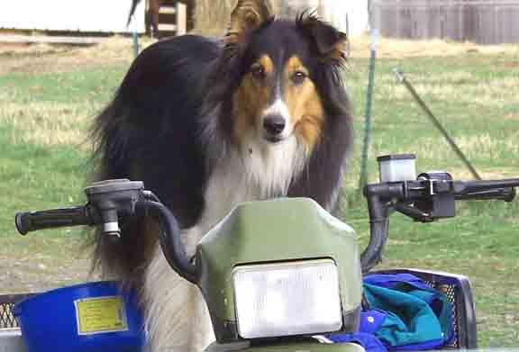 dog photo road - photo #26